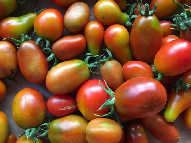 tomates-cerises-ED